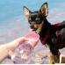 Непроливаемая бутылка поилка для собак Pet Care Cup